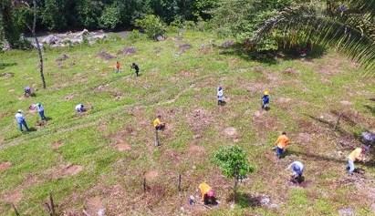 Imagen: Personas trabajando la tierra